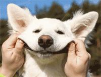 customer-service-dog